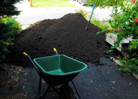 Как сделать плодородной землю на дачном участке